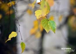 Осень в поселке