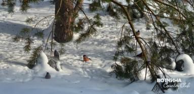 Участки с лесом... и птичками