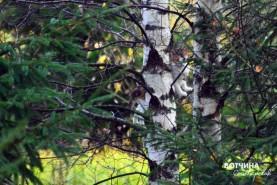 Найти белую кошку на белом дереве на очень большом участке