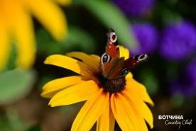 Пока цветут цветы - лето не закончилось!