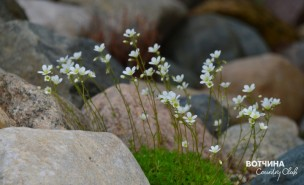Вотчинская флора