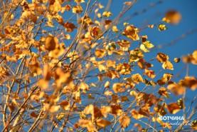 Платье золотое у деревьев на плечах.