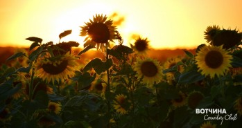 солнце в солнце