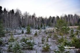 Зимний лес – красота, которую сложно передать словами!