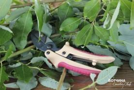Универсальный инструмент любого садовода - секатор!