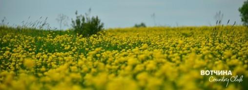 """Купава - это любимое растение на садовых участках. Её часто называют \""""жарки\"""", уж очень похожи ярко-оранжевые цветки на раскалённые угольки, которые словно \""""жаром горят\"""""""