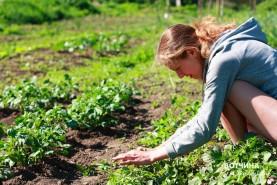 Приятные весенние заботы в огороде