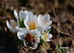 Скоро и пчелы с нашей пасеки вылетят на весенние луга