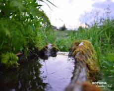 Живая вода  - один из ключей Вотчины
