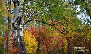Разноцветное колье на шее осени