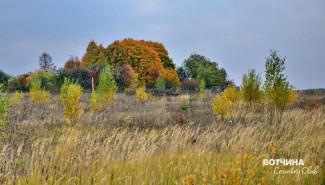 Разноцветные деревья. Прилесок на Вотчине.