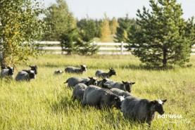 Для животных на нашей ферме предоставляются райские условия.