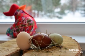 Декоративные курочки наших жителей несут вот такие красивые яйца!