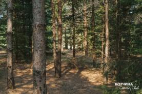 Прилесные участки - настоящее уединение